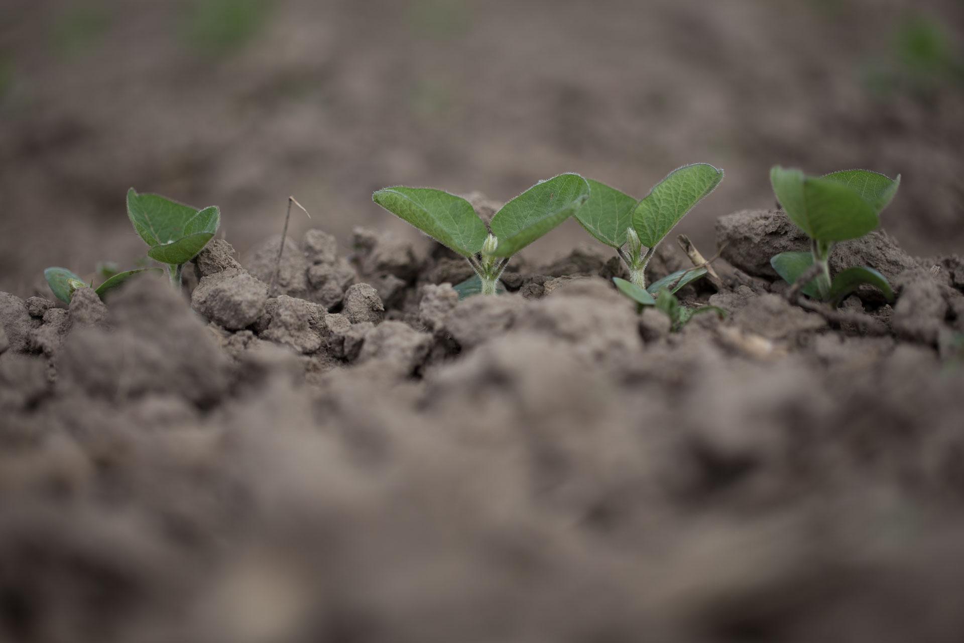 VG-Landwirtschaft-3