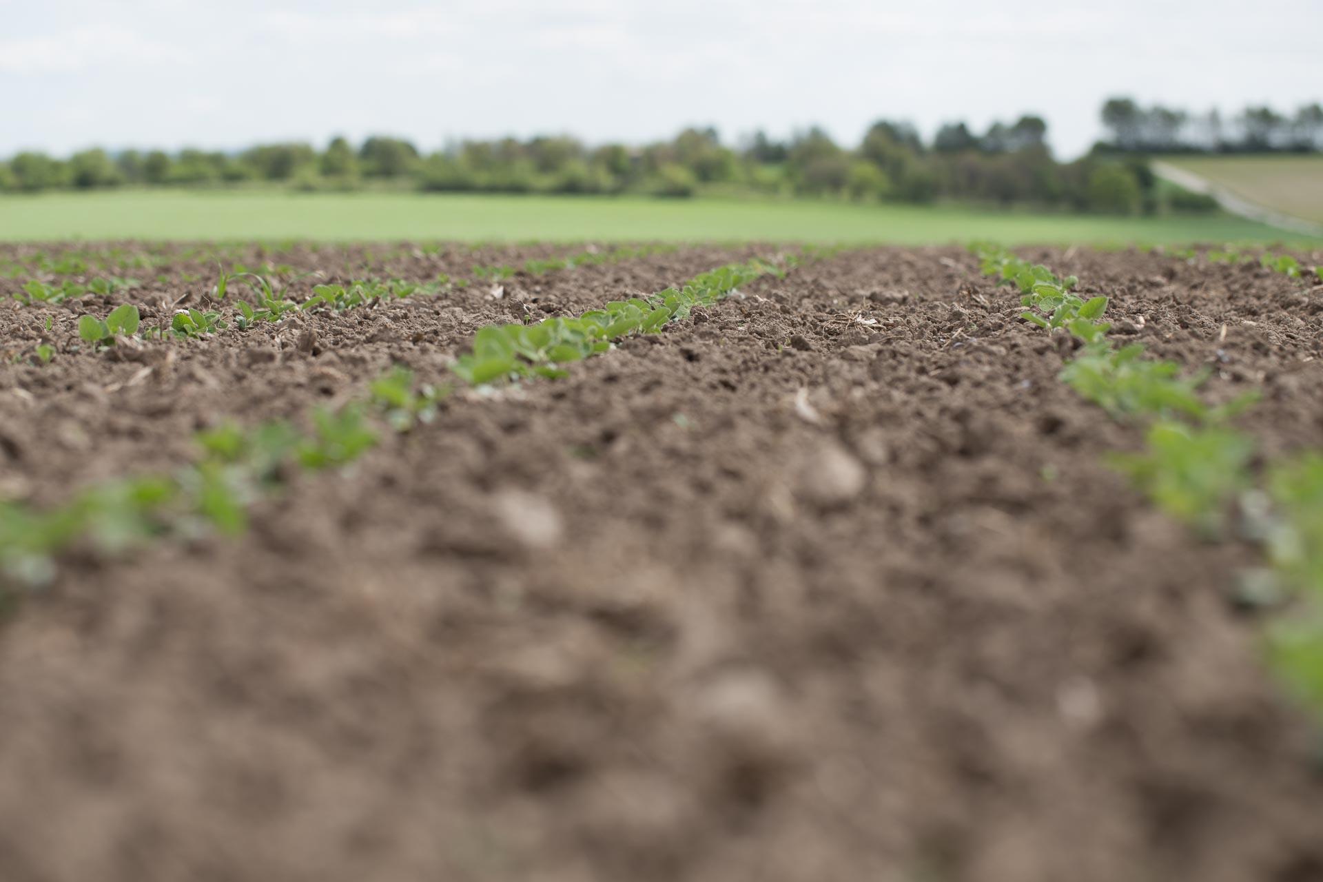 VG-Landwirtschaft-4